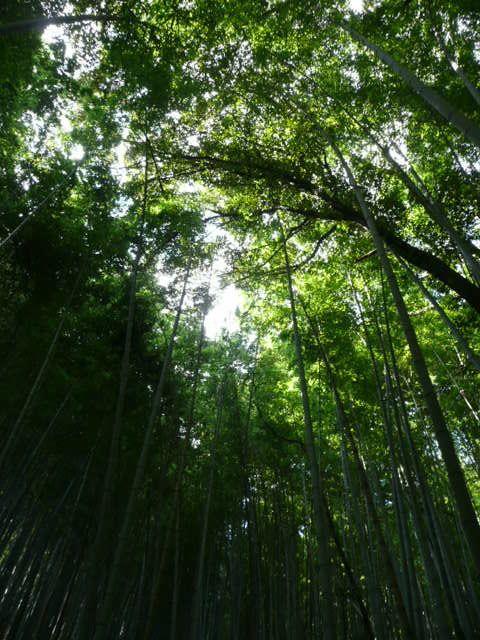 f:id:tsurukawah:20100124131545j:image