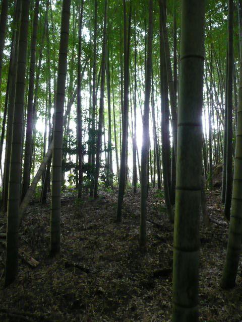 f:id:tsurukawah:20100124131610j:image