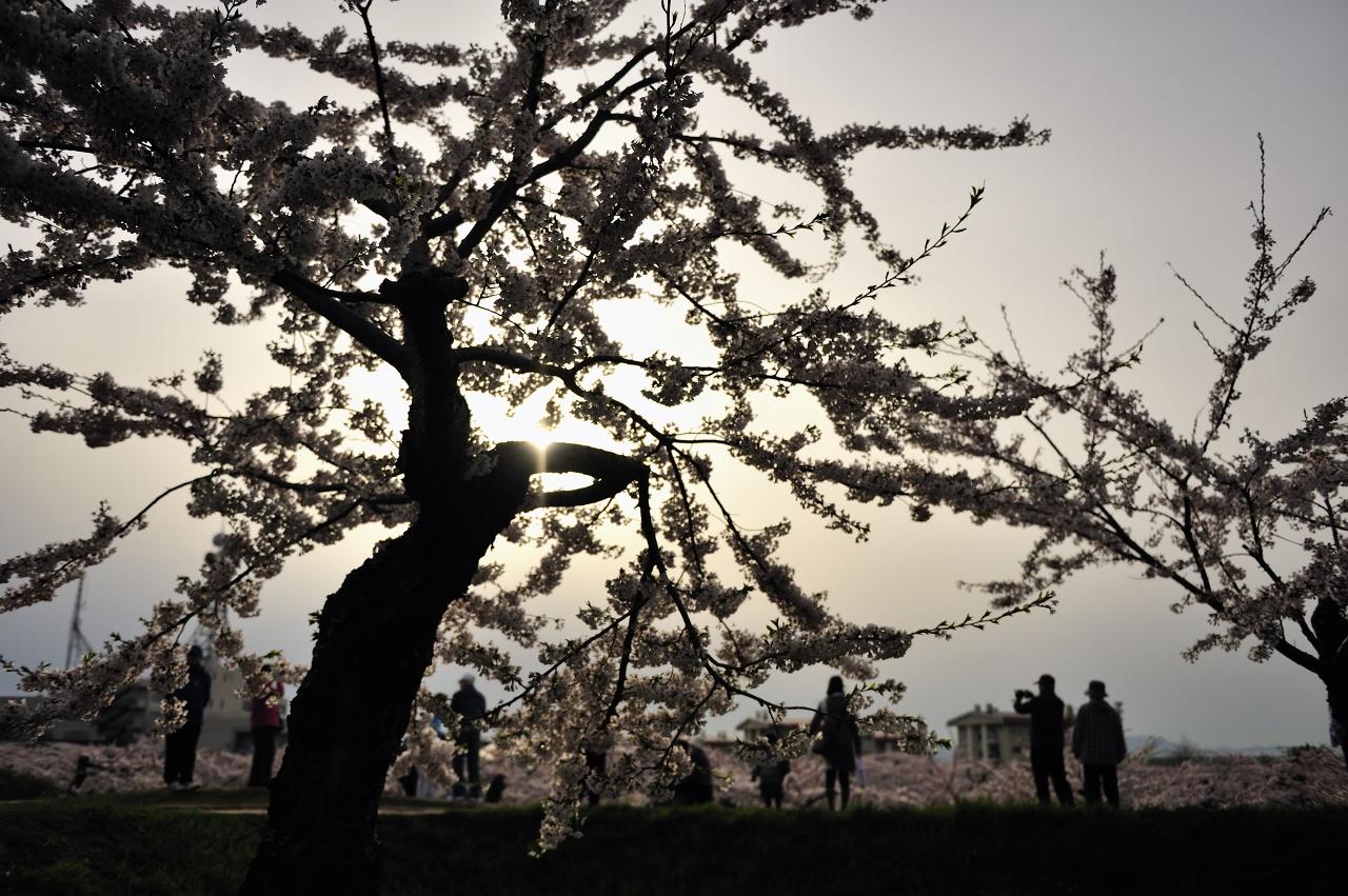 函館桜2010!_e0171886_1485270.jpg
