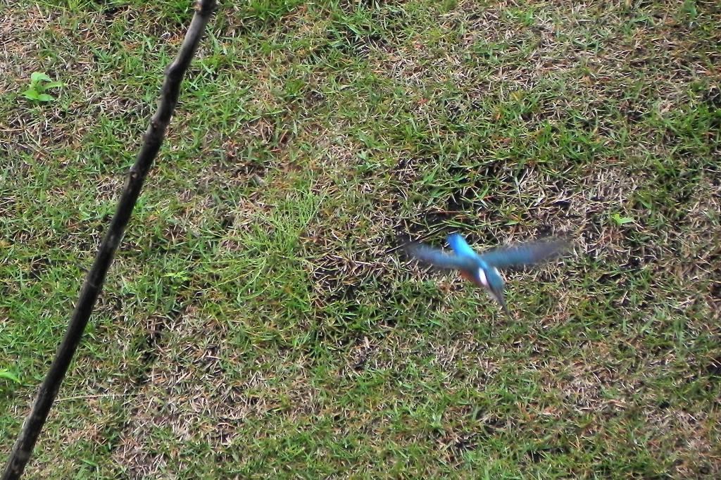 雨の中の鳥撮り_b0024798_9505672.jpg