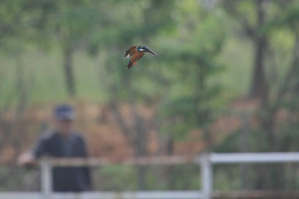 雨の中の鳥撮り_b0024798_9513354.jpg