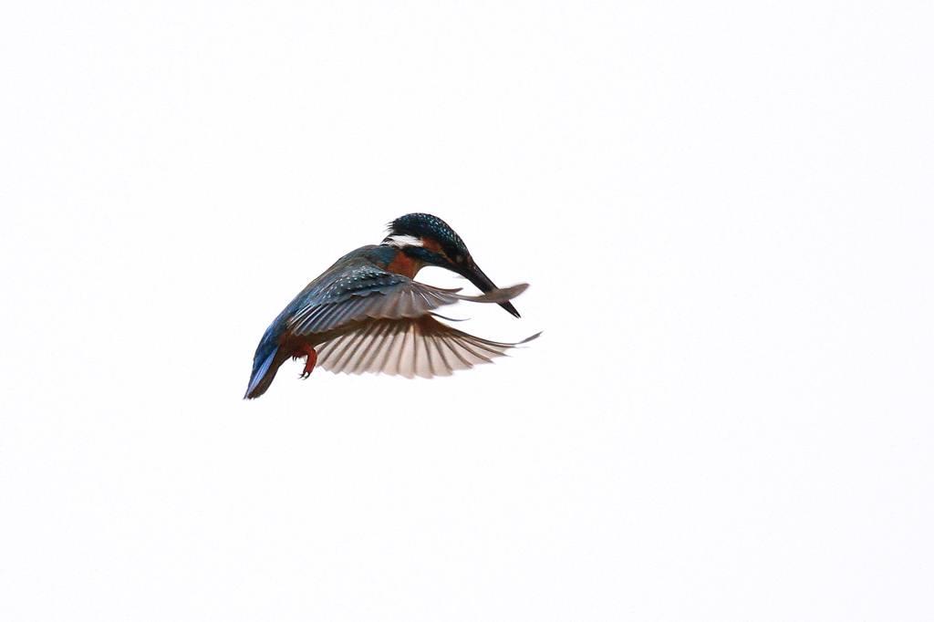 雨の中の鳥撮り_b0024798_9514599.jpg