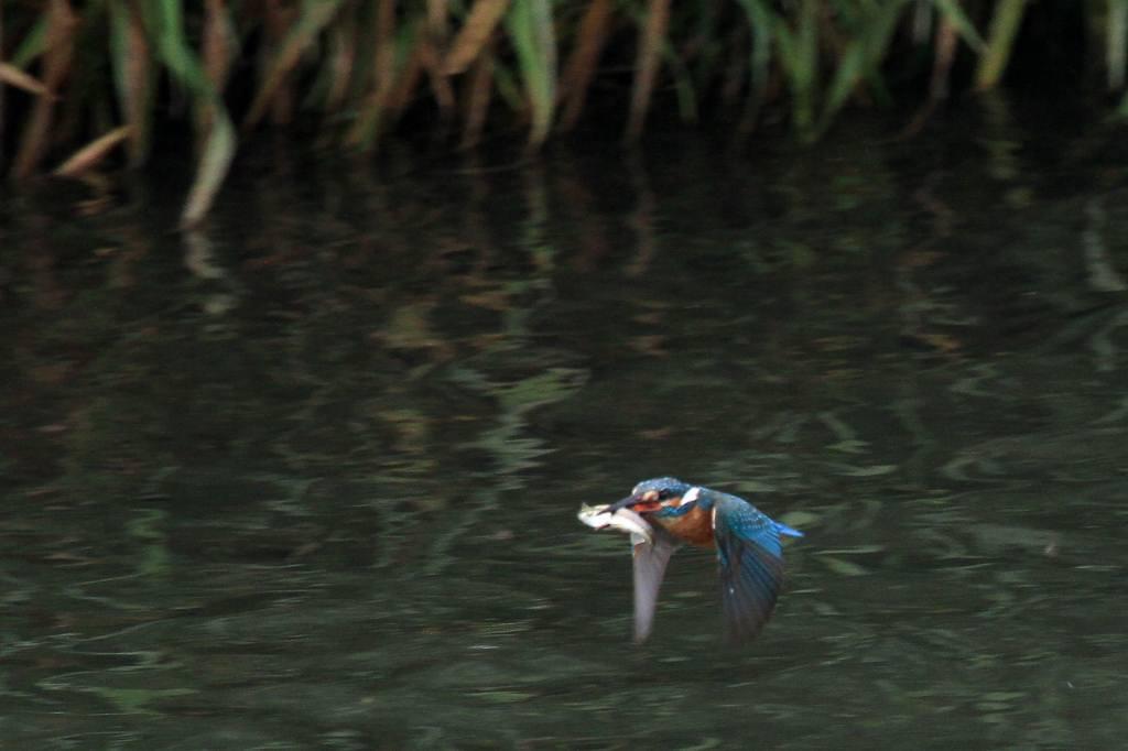 雨の中の鳥撮り_b0024798_9515568.jpg