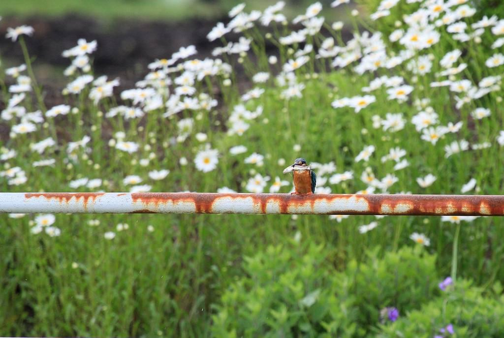 雨の中の鳥撮り_b0024798_952535.jpg
