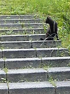階段の黒猫_f0235201_23153138.jpg