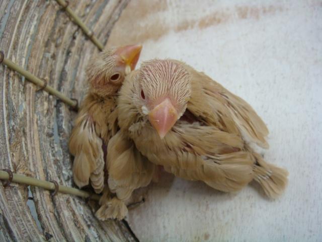 インコ・文鳥・モルモット・ハムスター_f0189122_1204357.jpg