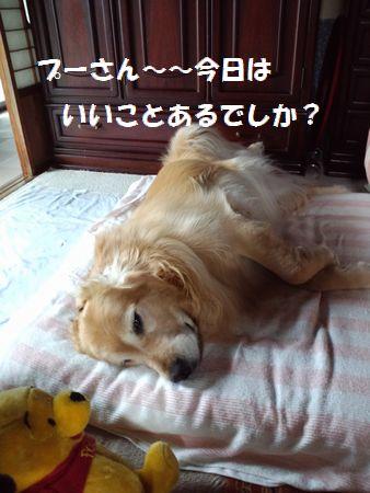 b0127531_1612953.jpg
