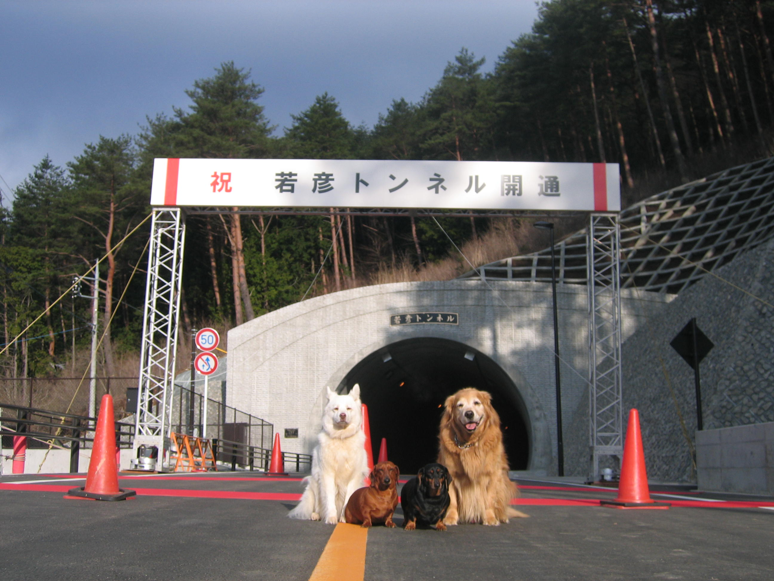 森の妖精ニーナ誕生秘話_d0161933_14334396.jpg
