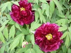 春の花_c0197734_16421065.jpg