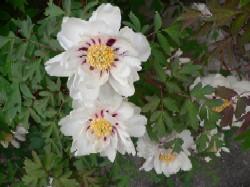 春の花_c0197734_16422337.jpg