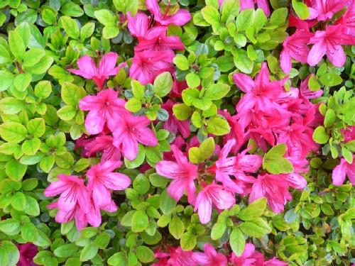 春の花_c0197734_16445677.jpg