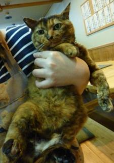 猫の手会員猫 のぇる編。_a0143140_22485085.jpg