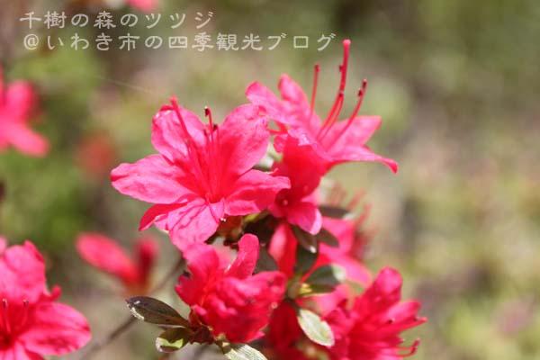 f0105342_1533521.jpg