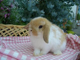 ホーランド22年4月8日誕生ブロークンオレンジ女の子_b0073753_10355.jpg