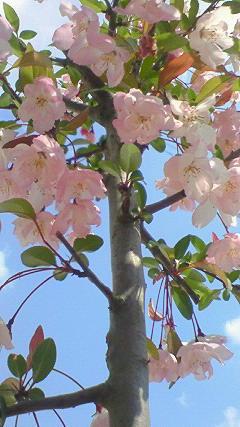 四年目の春。_b0165760_22434324.jpg