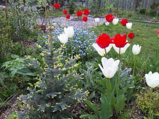 四年目の春。_b0165760_22434353.jpg
