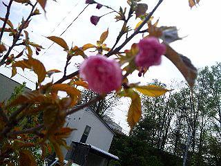 四年目の春。_b0165760_22434398.jpg