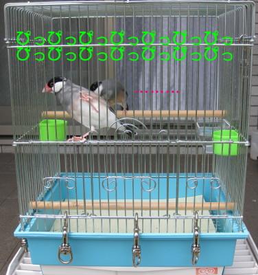 b0158061_21204522.jpg