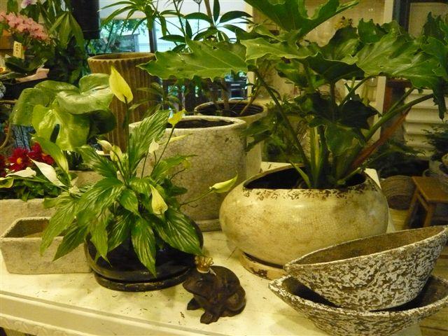 これからは、グリーンの季節・鉢もおしゃれに・・・・_b0137969_18272481.jpg