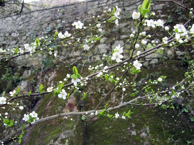 フランスへGO♪♪^^♪♪ 〜モンサンミッシェル修道院^^〜_f0119369_22132285.jpg