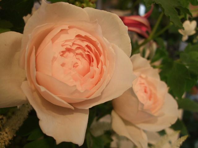 オークリーフ花の教室(島崎さんの作品)_f0049672_16523585.jpg