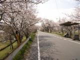 桜_d0155273_14253746.jpg