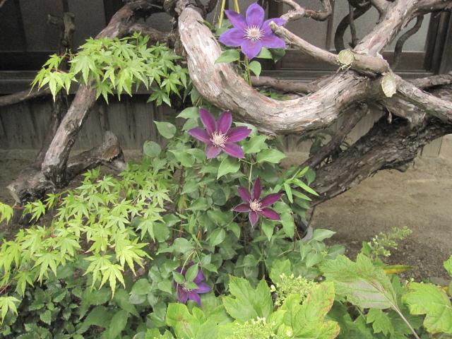 今、花盛り 2_e0181373_20364393.jpg