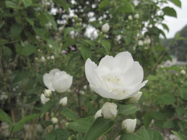 今、花盛り 2_e0181373_20541830.jpg
