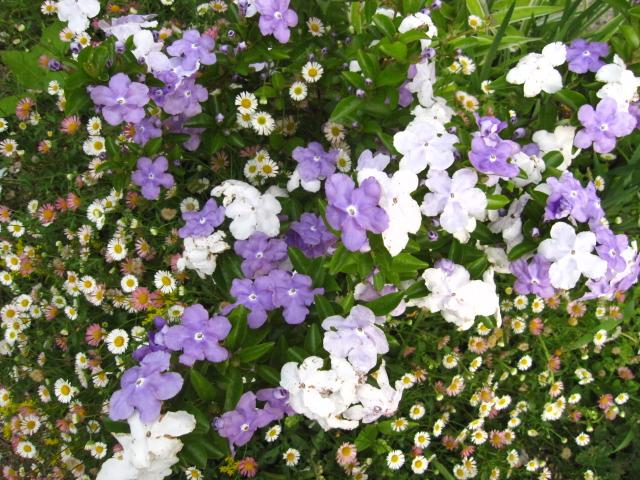 今、花盛り 2_e0181373_2073618.jpg