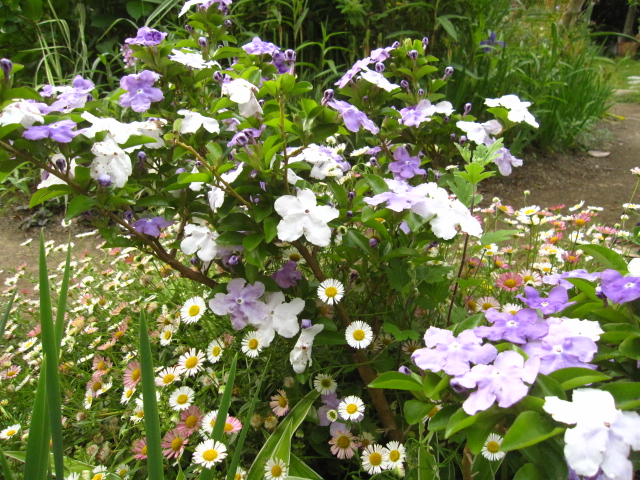 今、花盛り 2_e0181373_208185.jpg