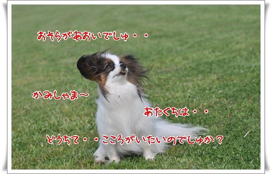 c0075585_7541421.jpg