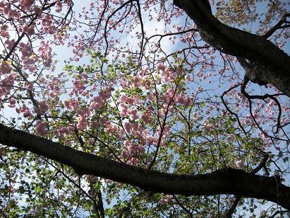 春の散策_c0128489_03032100.jpg