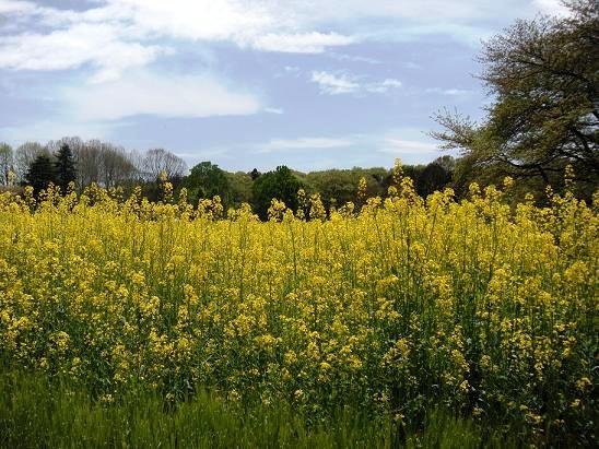 春の散策_c0128489_0313552.jpg