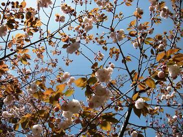春の散策_c0128489_0322257.jpg