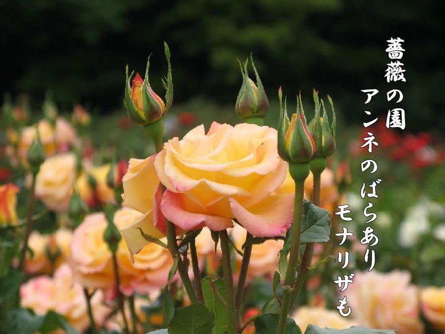f0137096_21511644.jpg