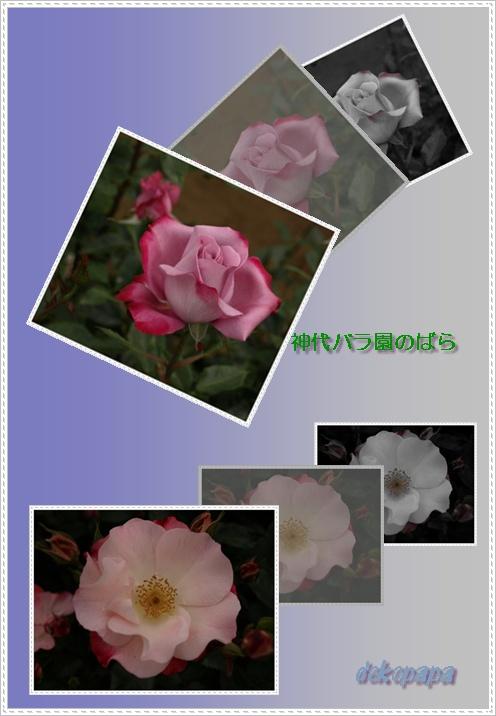 d0028304_1765360.jpg