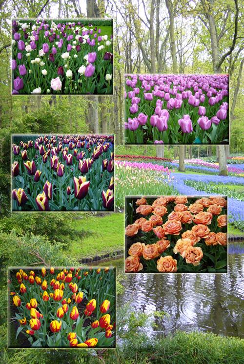 オランダ・ベルギー(2)_c0051105_20233342.jpg