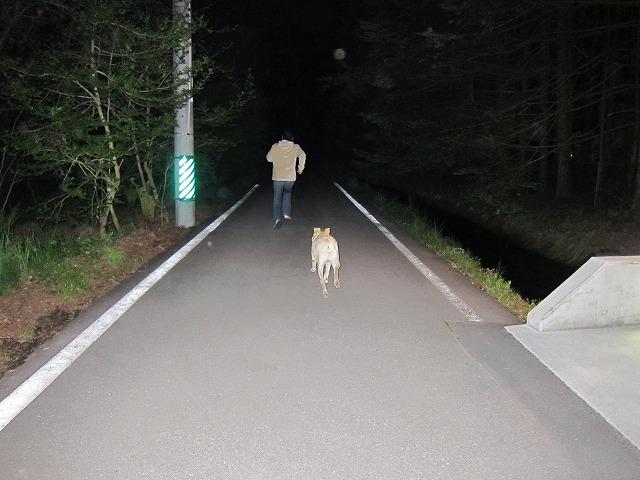 追いかけごっこをした夜_e0192217_1955446.jpg