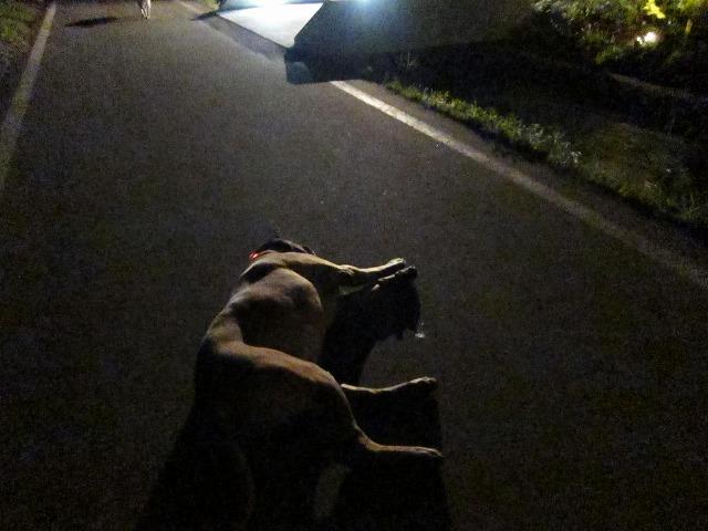 追いかけごっこをした夜_e0192217_1958580.jpg