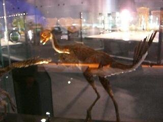 恐竜大好き♪_d0133225_21215656.jpg