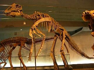 恐竜大好き♪_d0133225_217194.jpg