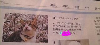 小籠包猫 ぽー編。_a0143140_2112087.jpg