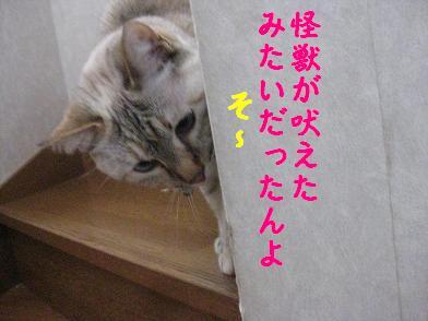 b0151748_16352490.jpg