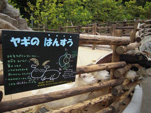 ヤギ山ガイド_b0024758_0364856.jpg