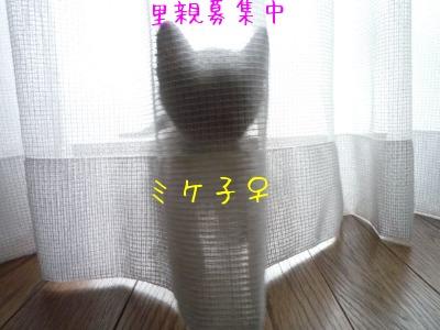 f0177261_1749349.jpg