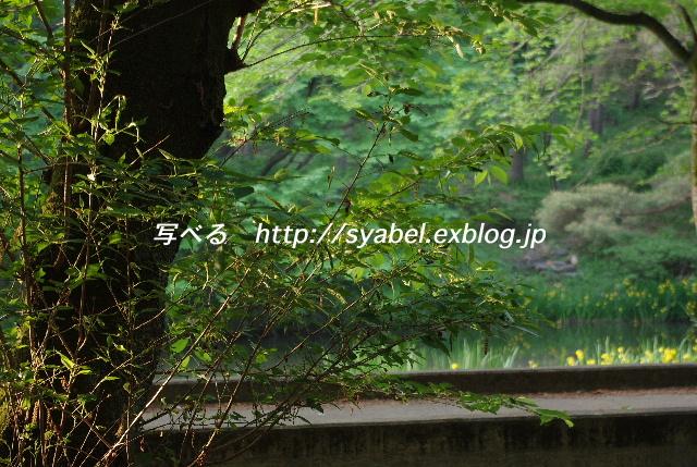 c0153764_6563575.jpg
