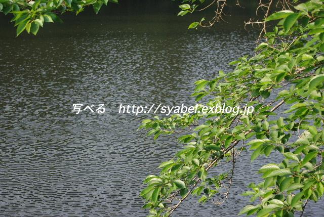 c0153764_6572637.jpg