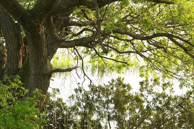 輝きの湖畔_f0018464_1924086.jpg