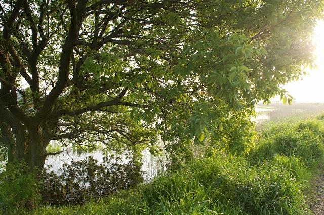 輝きの湖畔_f0018464_1924979.jpg