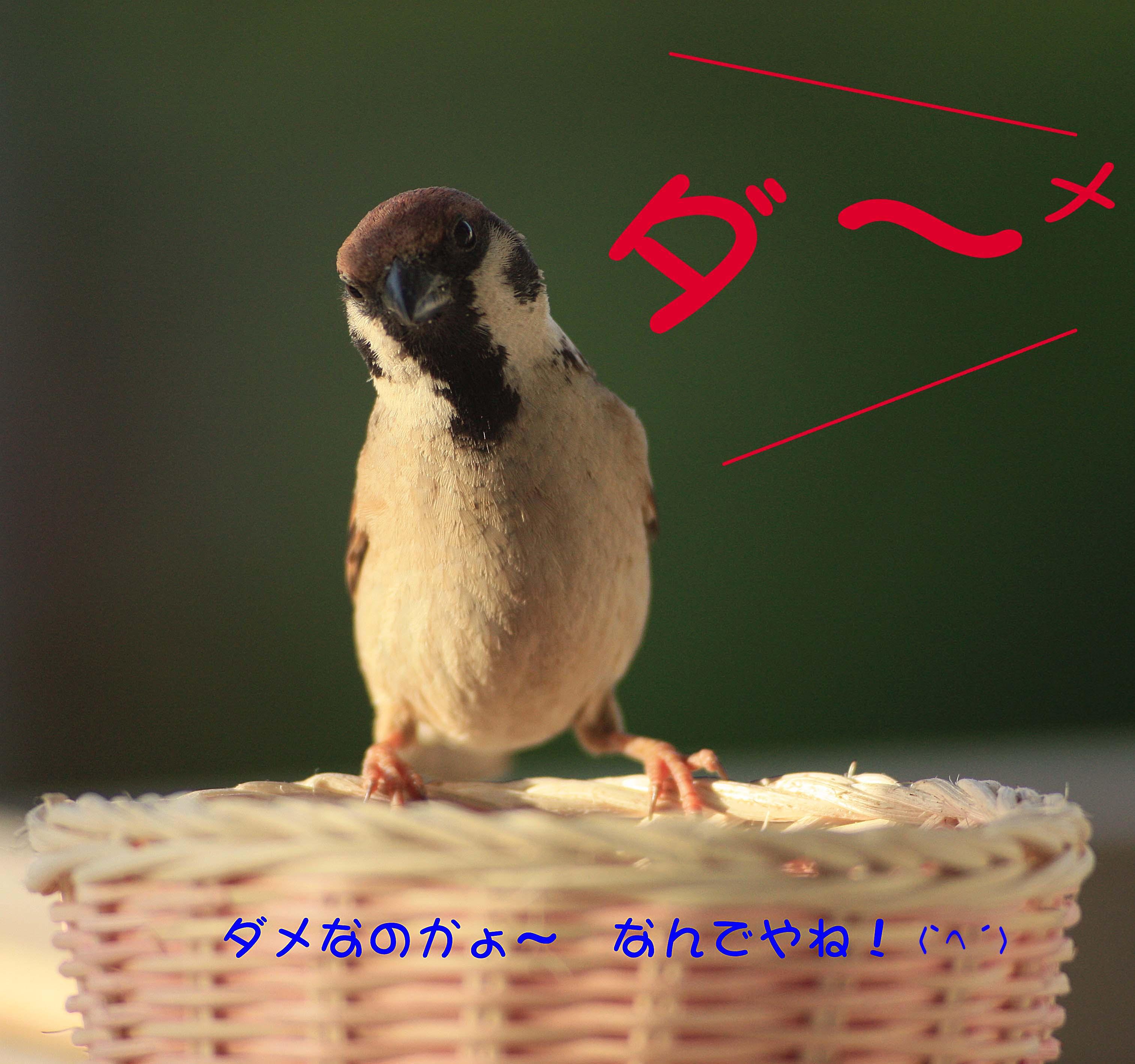 f0215767_16395233.jpg
